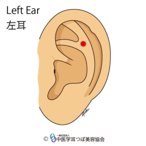 ear reflex point of lower back on the left ear