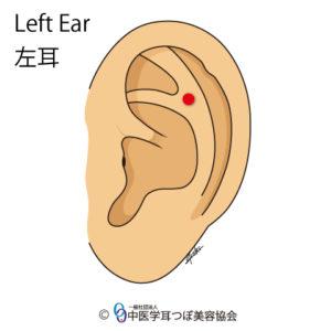 ear reflex point of lower back on the left ear