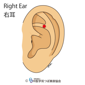 ear reflex point of buttock on the left ear