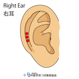 ear reflex point of shoulder on the right ear