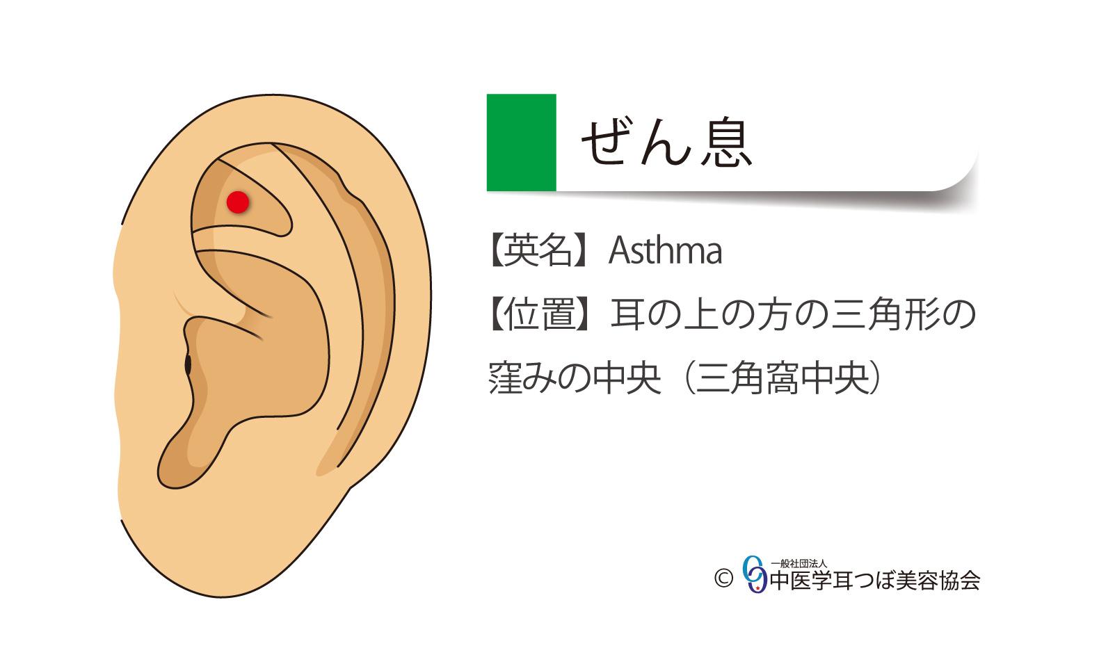 ぜん息の耳つぼ